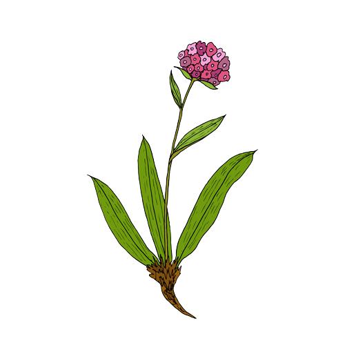 6 Brain Tonics in Ayurveda: Super-herbs for Mental Clarity