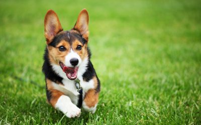 10 Natural Home Remedies for Dog Skin Allergies