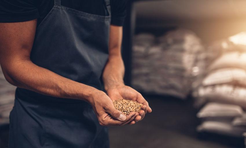 barley protein